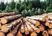 Дома теперь будут строить из качественной древесины.