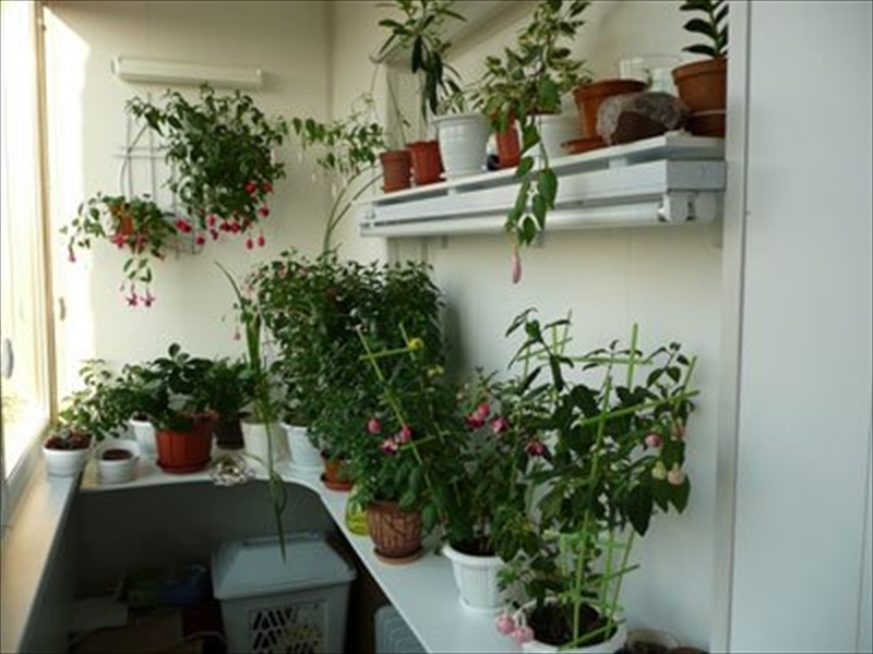 Как украсить застекленный балкон цветами шторами фото..